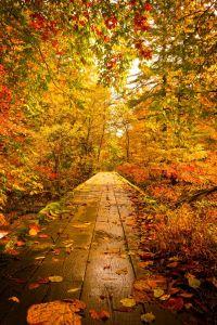 fond d'écran automne campagne